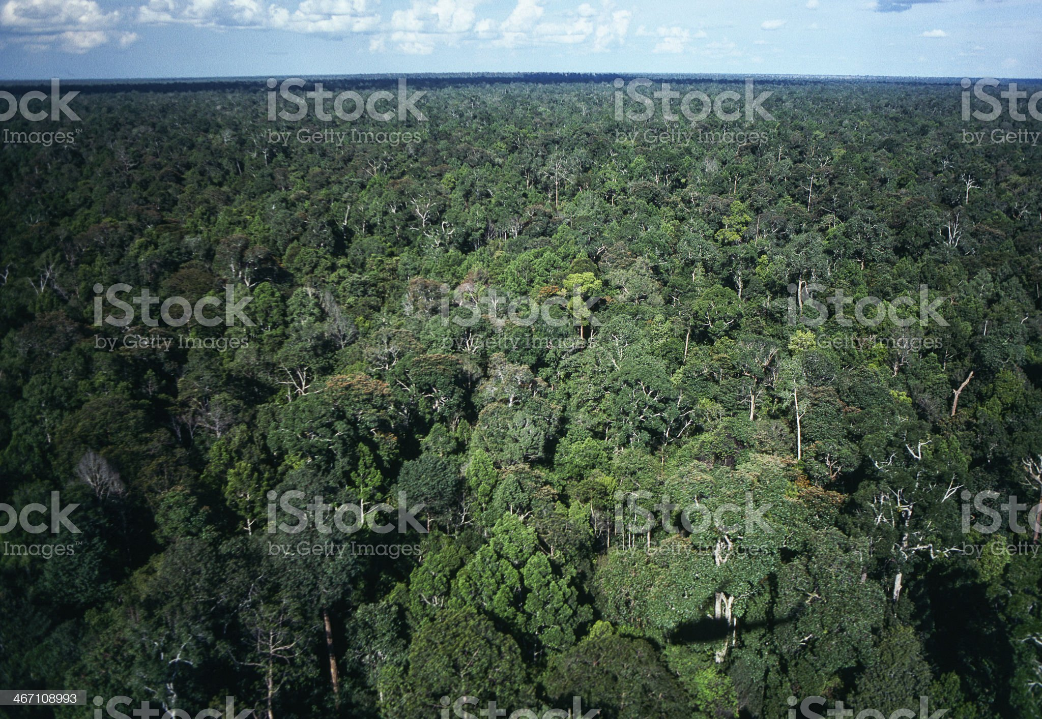 Tropical forest & oil industry. royalty-free stock photo