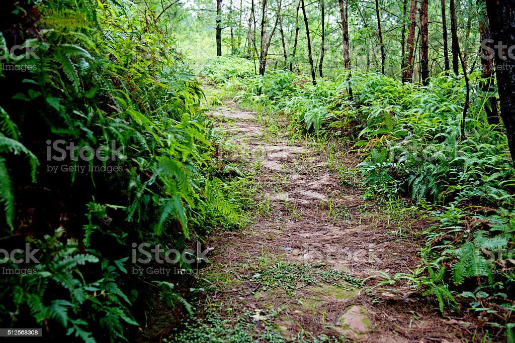 Tropical forest path stock photo