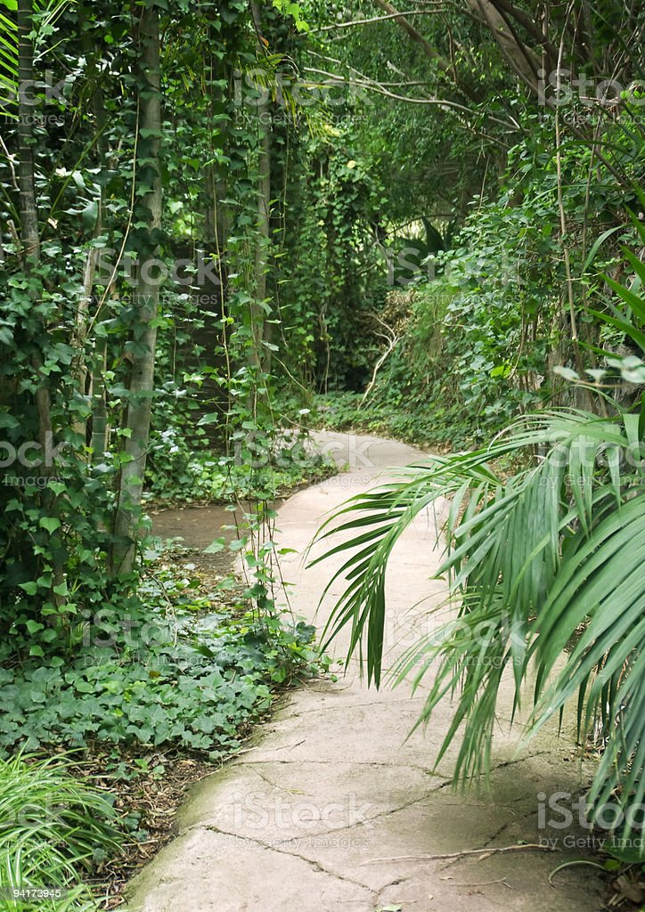 Tropical forest path royalty-free stock photo