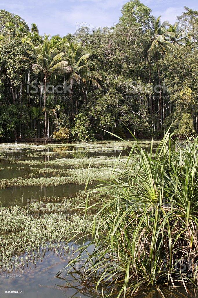 Floresta Tropical foto de stock royalty-free