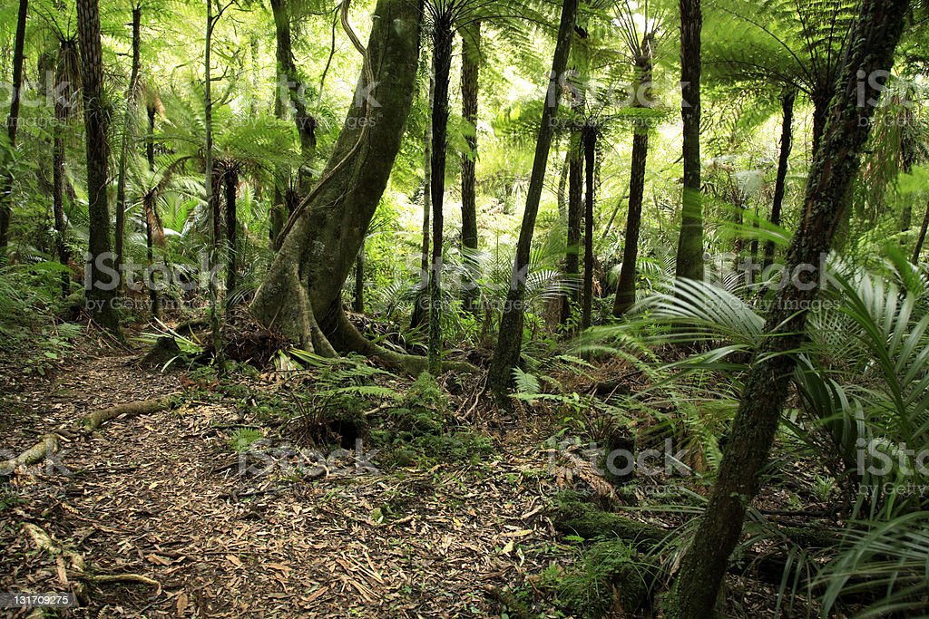 Tropical forest royalty-free stock photo