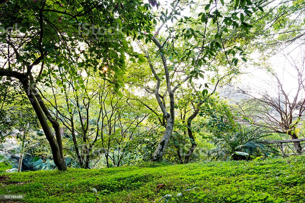 Tropical forest stock photo