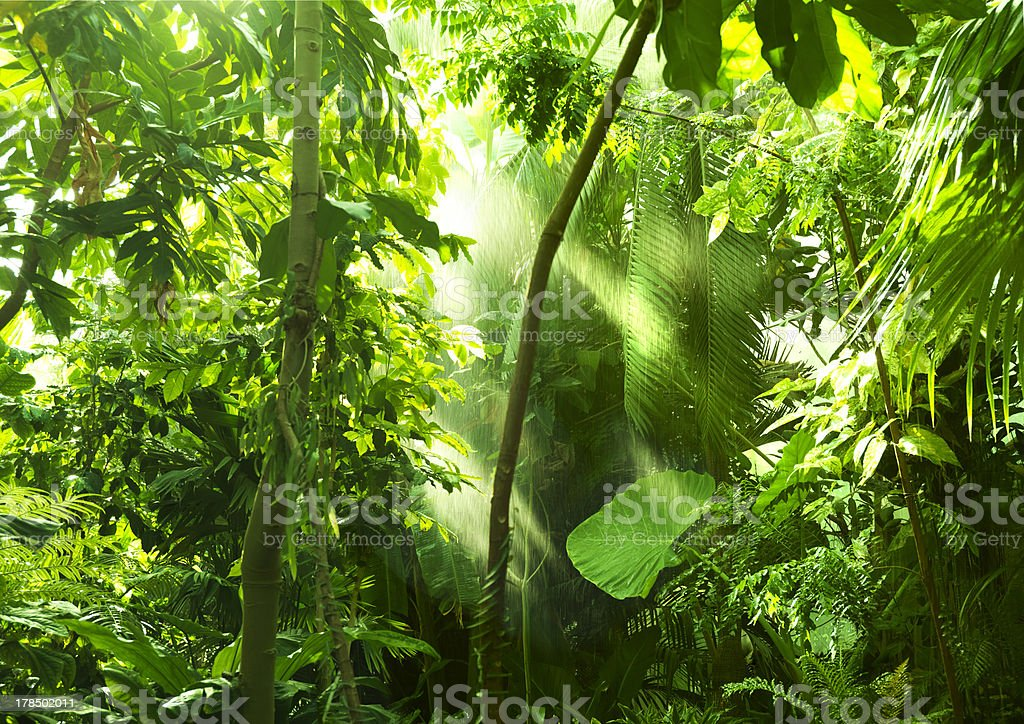Tropical forest, trees in sunlight and rain royalty-free stock photo