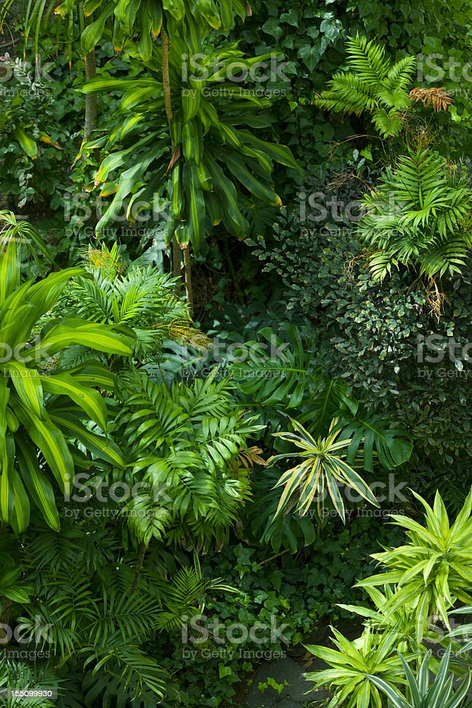 Tropical frond garden stock photo