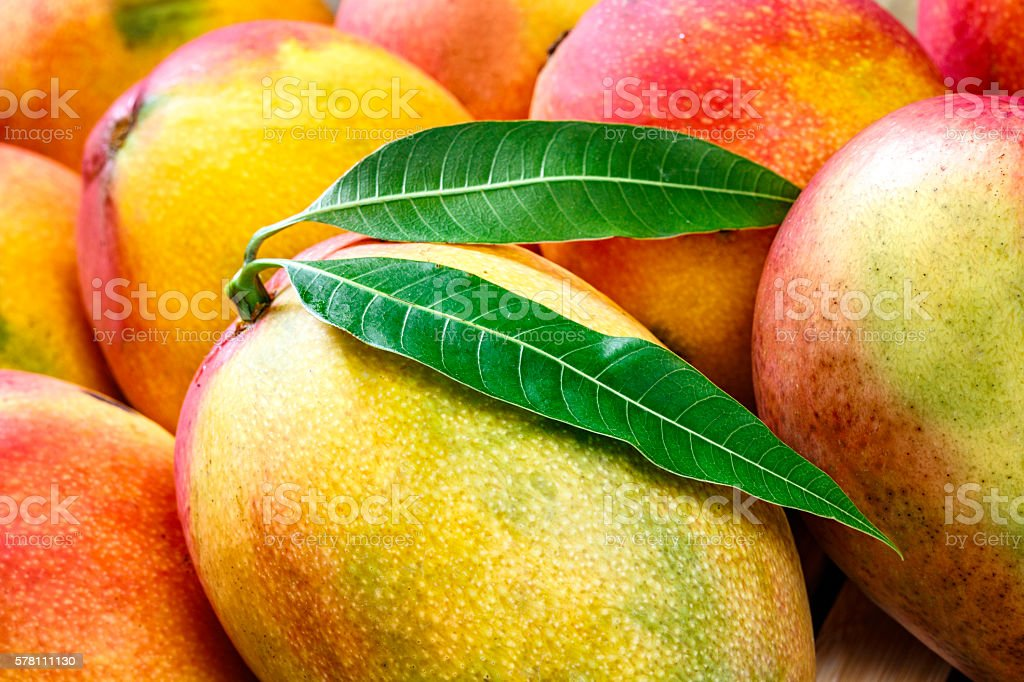 Tropical fruits group of ripe mangoes in a wooden tray stock photo