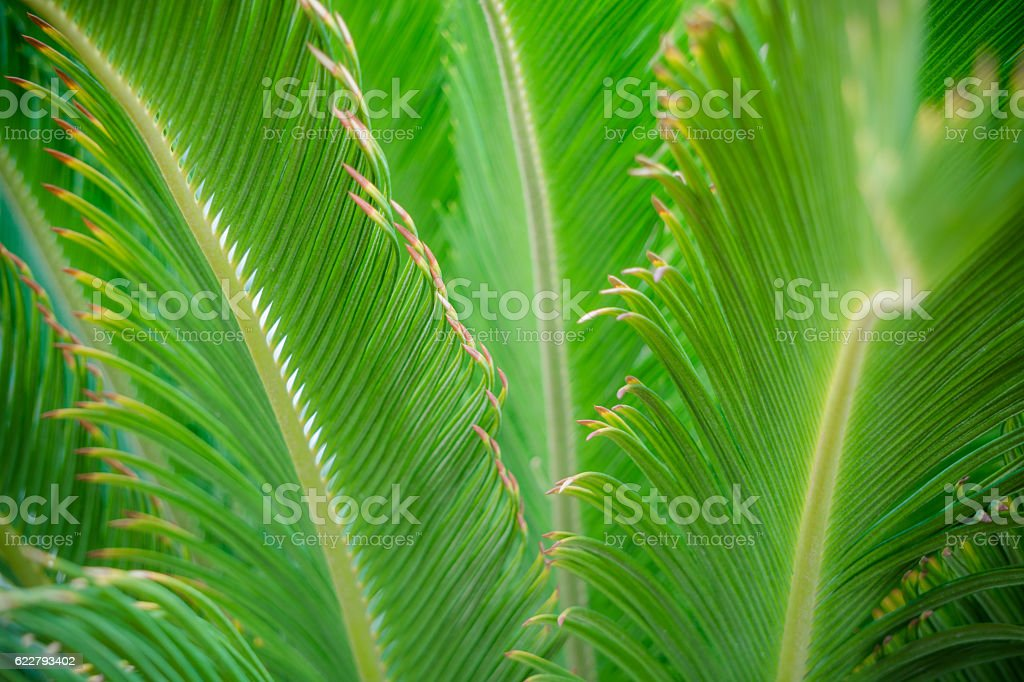 Tropical garden. Bright green palm leaves stock photo