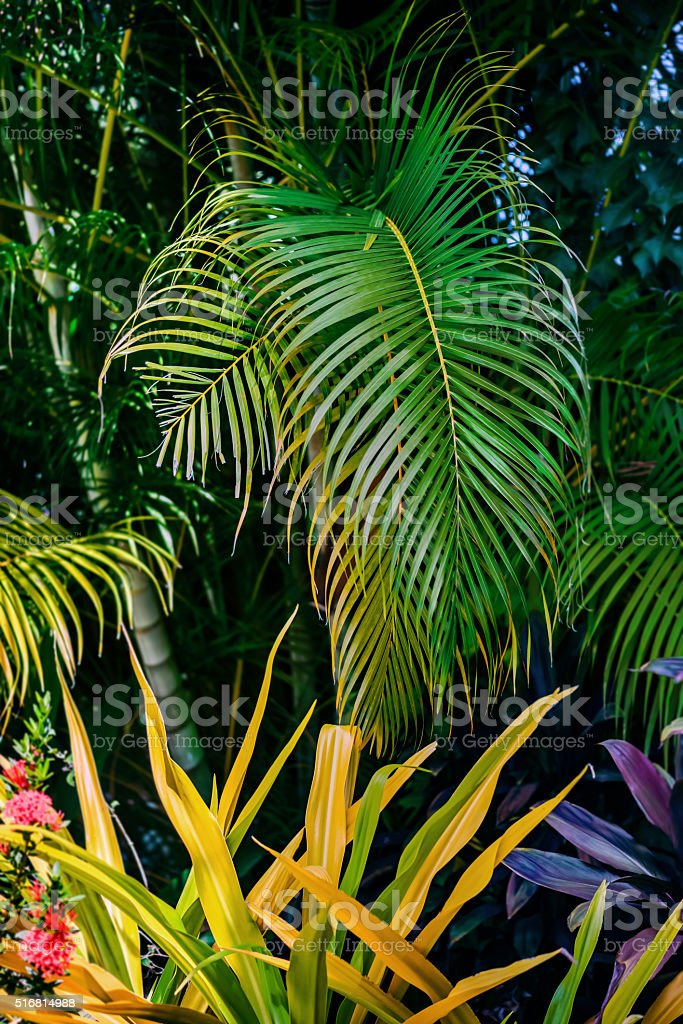 Tropical Garden lush green foliage and plants stock photo
