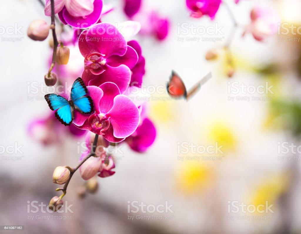 Tropical Garden With Butterflies stock photo