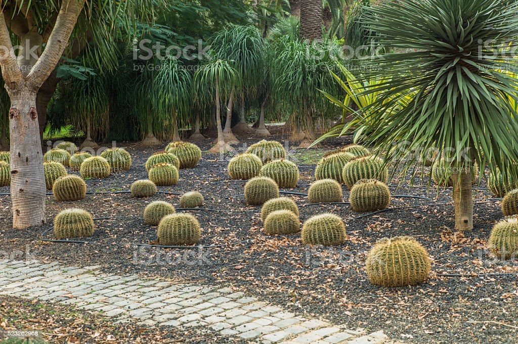 tropical garden with palm tree stock photo
