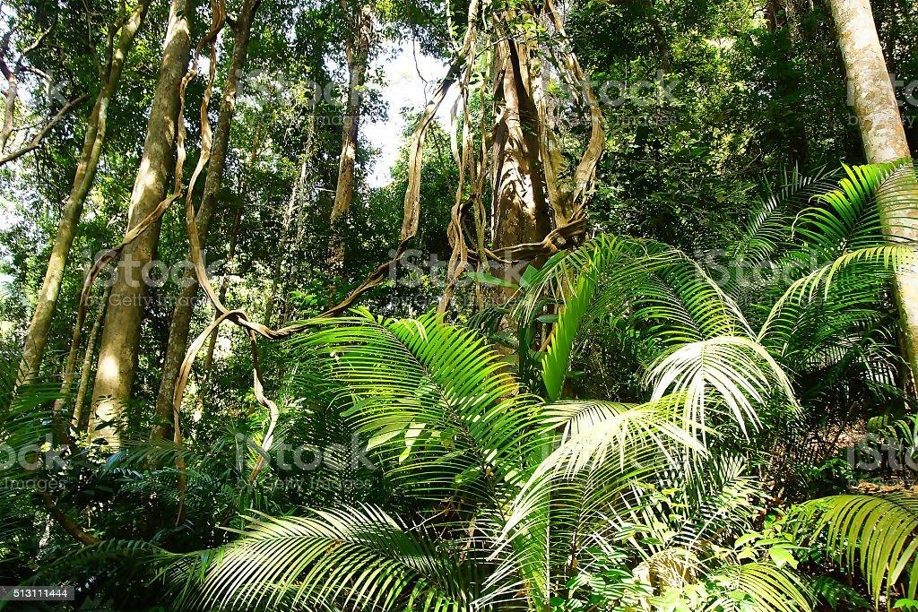 Tropical gigantic tree. stock photo