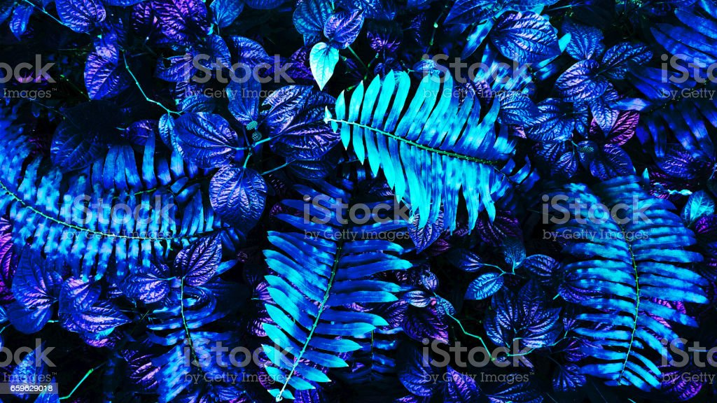 tropical glowing leaves stock photo