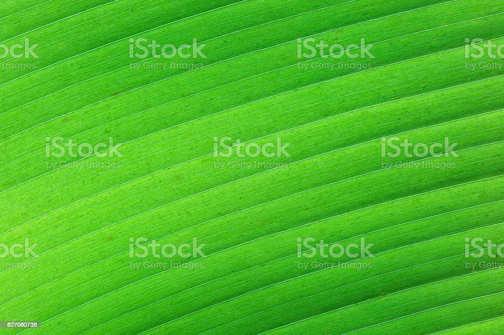Tropische grüne Blattstruktur stock photo