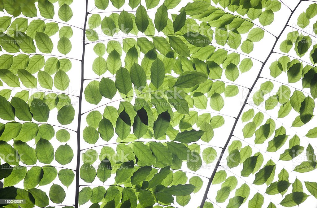 Tropical Green Leaves royalty-free stock photo