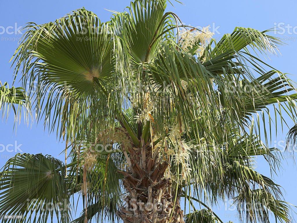 Tropical verde Folha de palmeira sobre fundo de céu azul foto de stock royalty-free