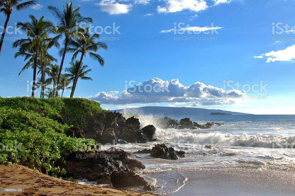 Tropical Hawaiian beach stock photo