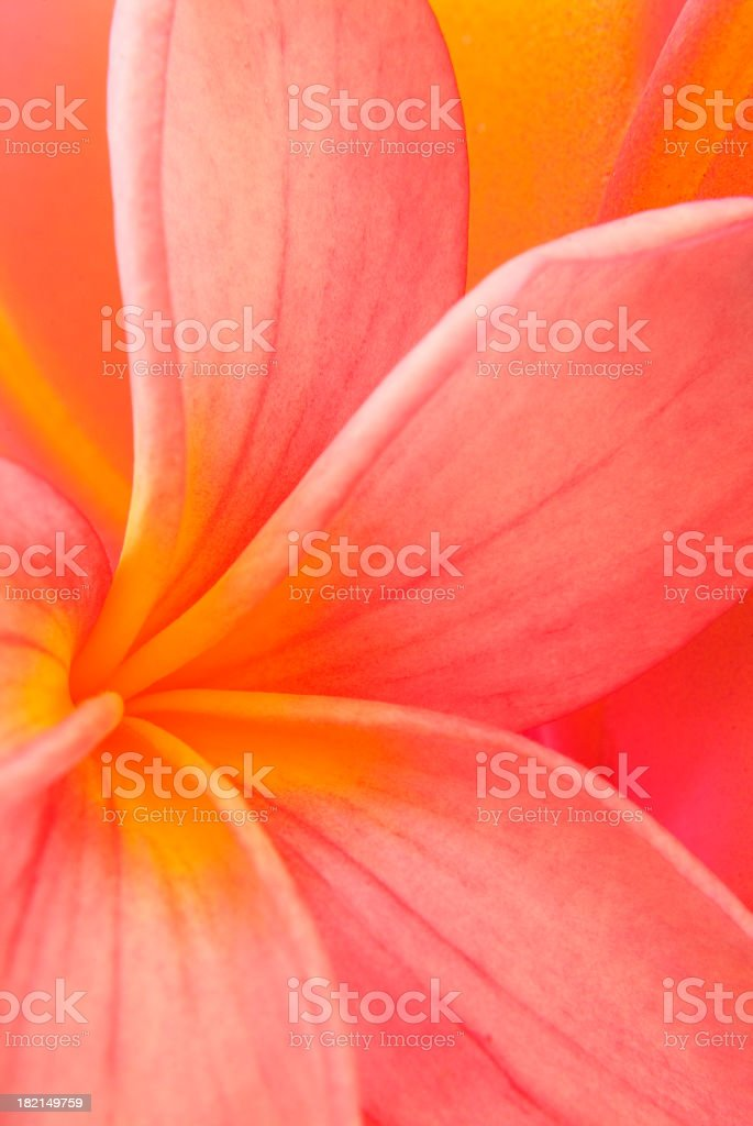 Tropical Heat royalty-free stock photo