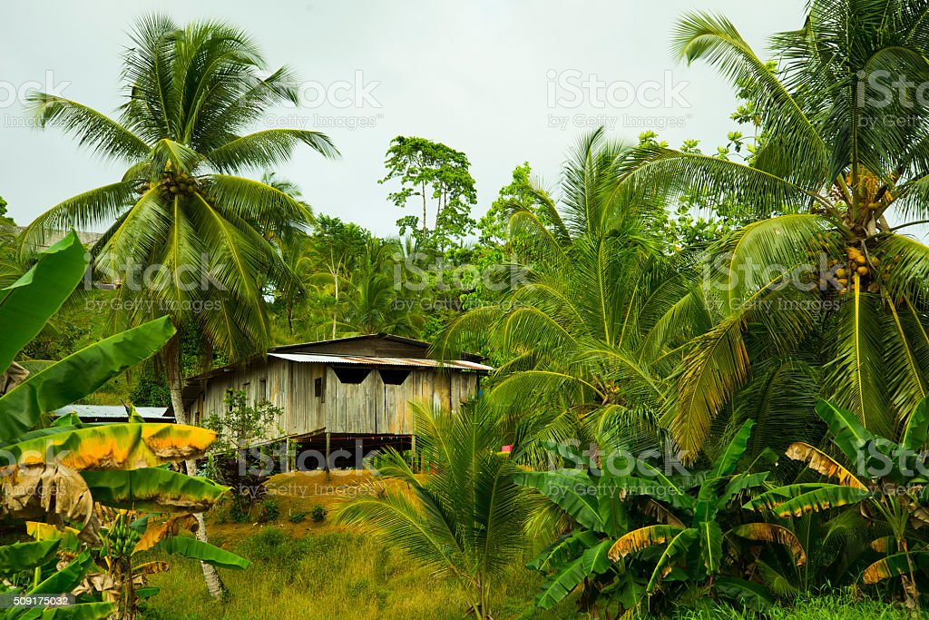 Tropical Hut Surrounded By Palm Trees stock photo