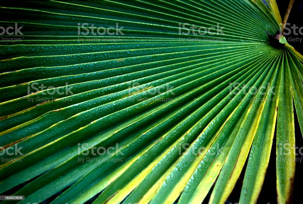 Tropical Infinity royalty-free stock photo