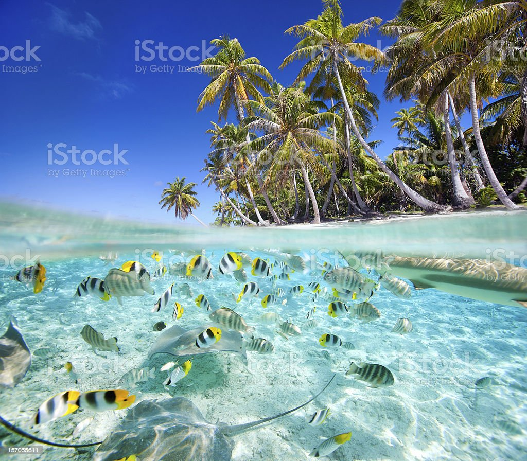 Tropical island above and underwater with fishes stock photo