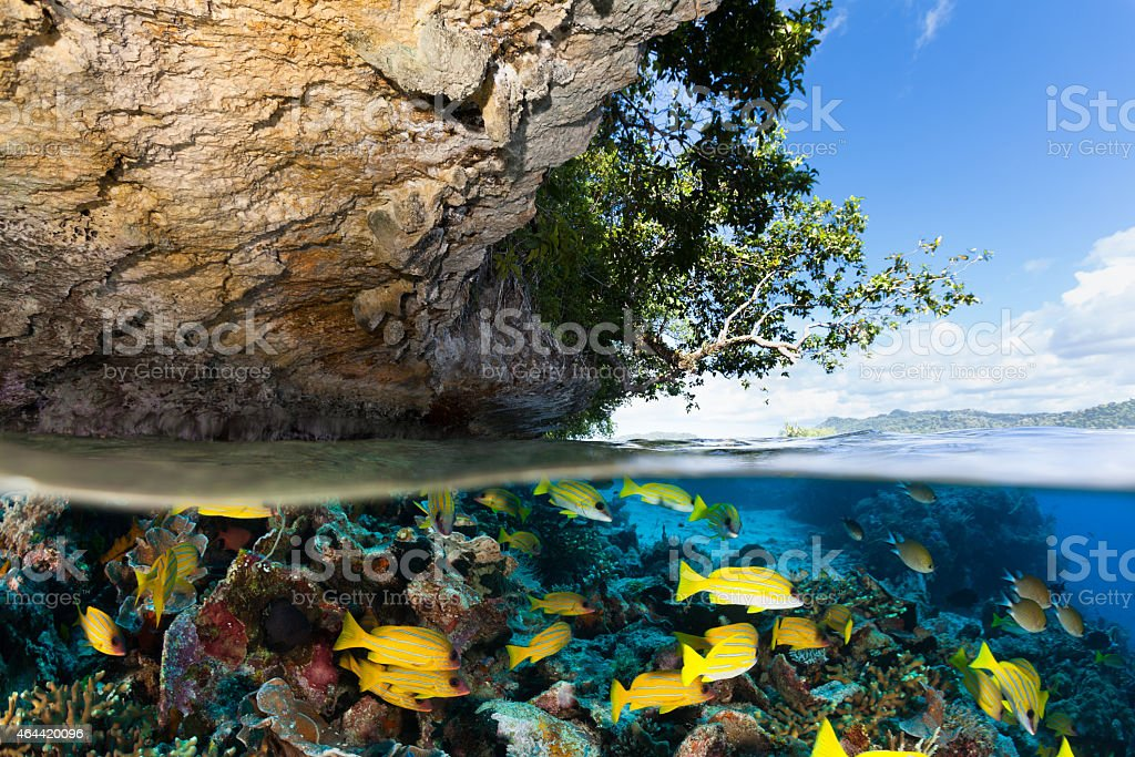 Tropical Island and Underwater Paradise for Divers, Raja Ampat, Indonesia stock photo