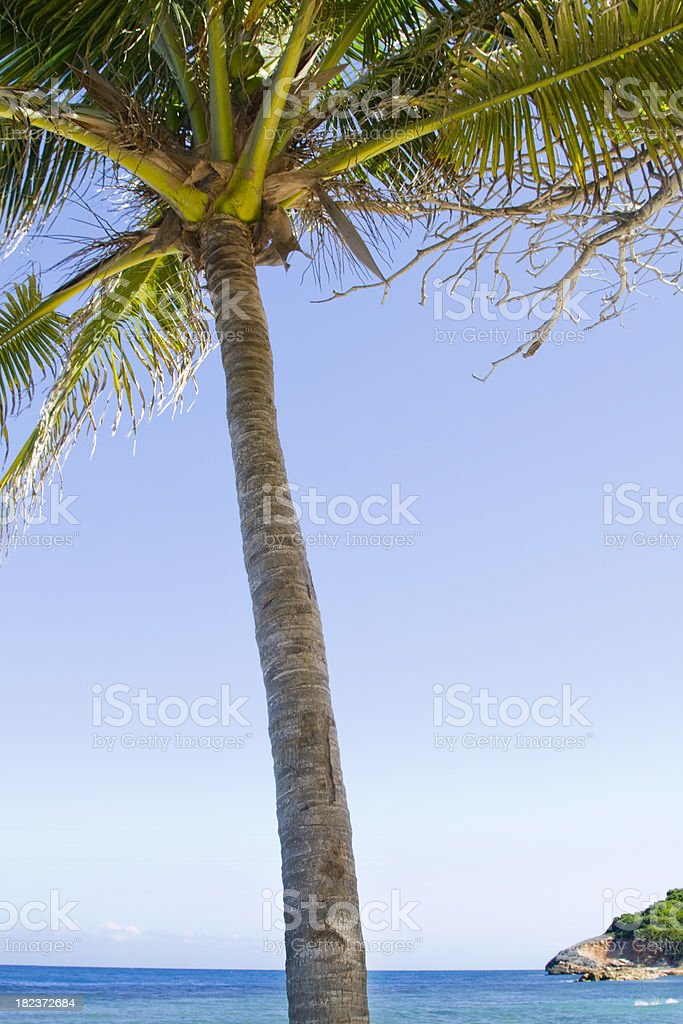 Tropical Island Palm Tree royalty-free stock photo