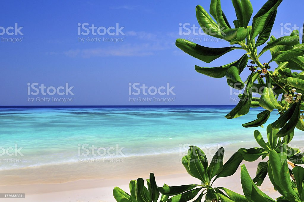 Tropical Island, Phuket royalty-free stock photo