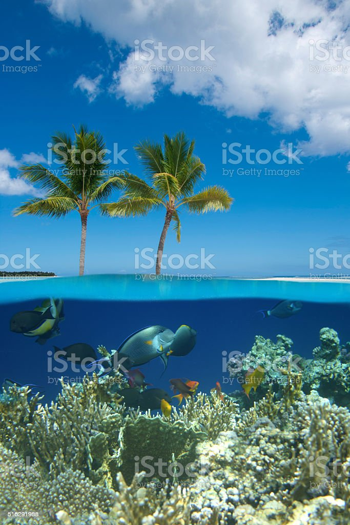 Tropical island with coral reef stock photo