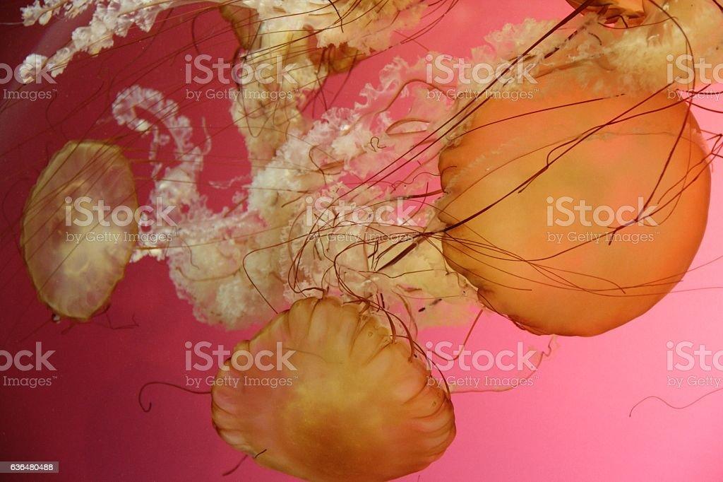 Tropical Jellies stock photo