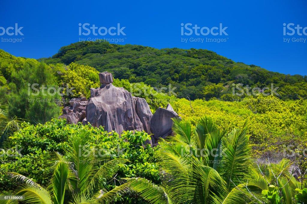 Tropical jungle of Seychelles stock photo