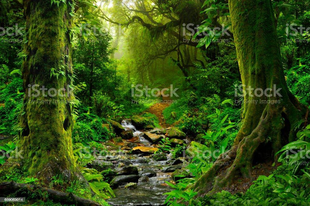 Tropical jungle stock photo