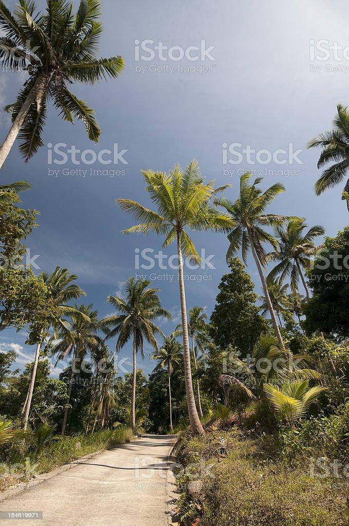 Tropical landscape background stock photo