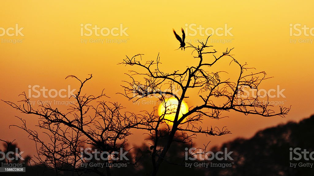 tropical landscape in sunset light stock photo