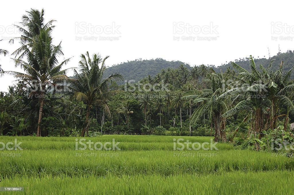 Tropical landscape, Santo Domingo - Philippines stock photo
