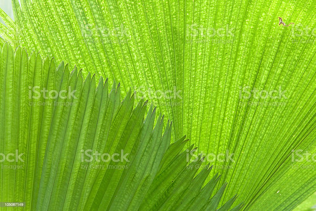 tropical leaf detail green texture background royalty-free stock photo