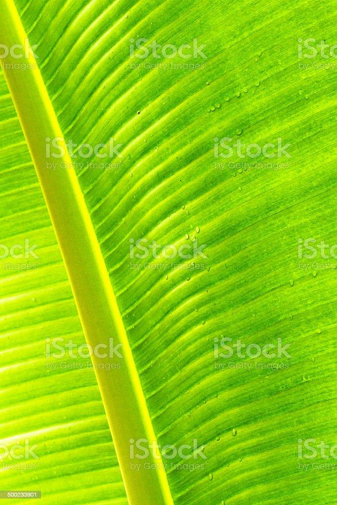 Tropische Blattmuster Lizenzfreies stock-foto
