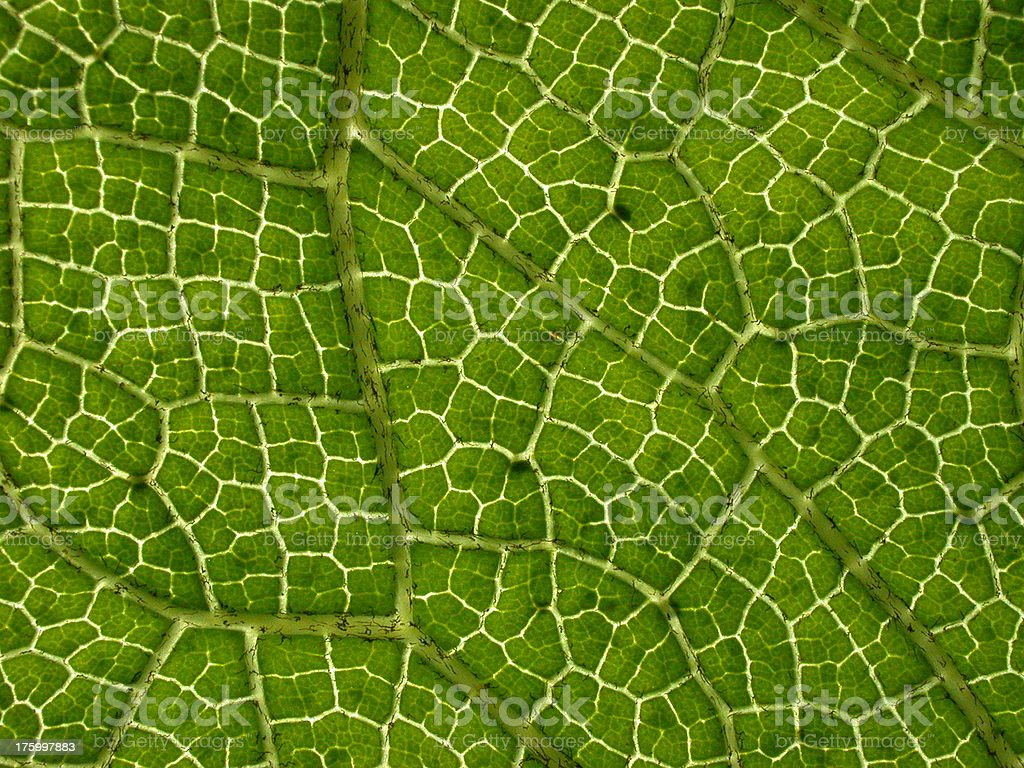 Tropical Leaf Texture Close Up royalty-free stock photo