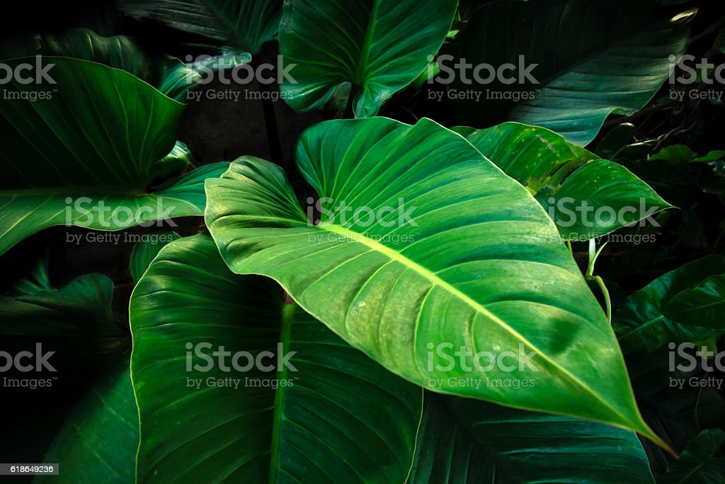 Tropical leaves background stock photo