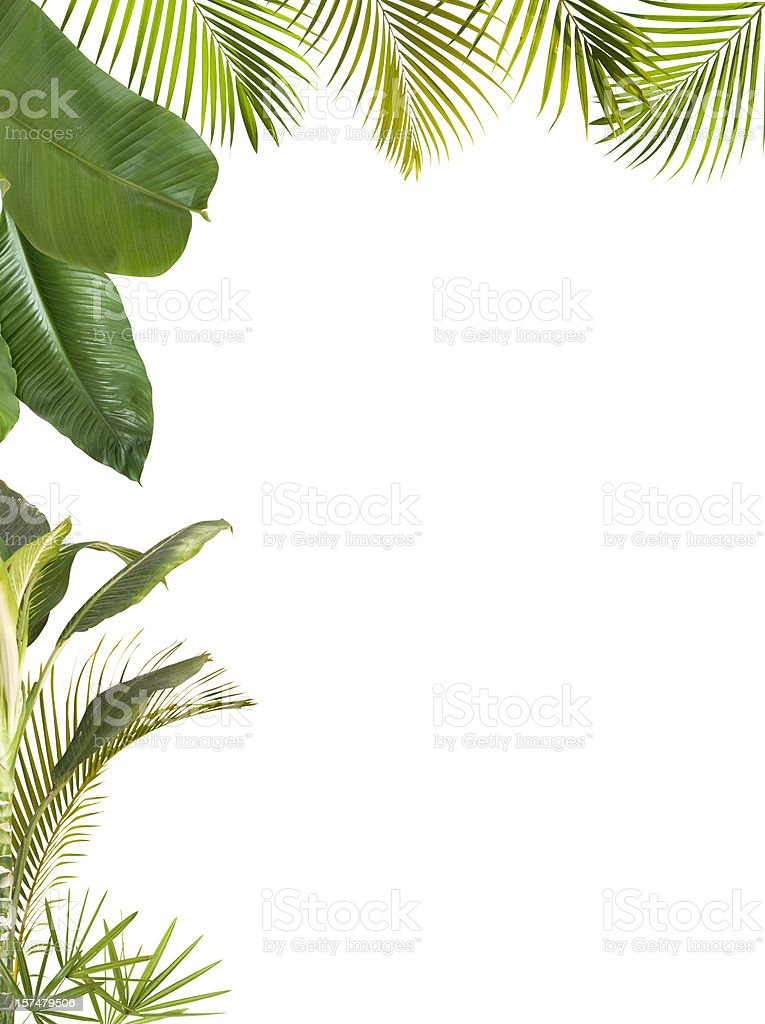 Tropical leaves frame isolated on white with copy space royalty-free stock photo