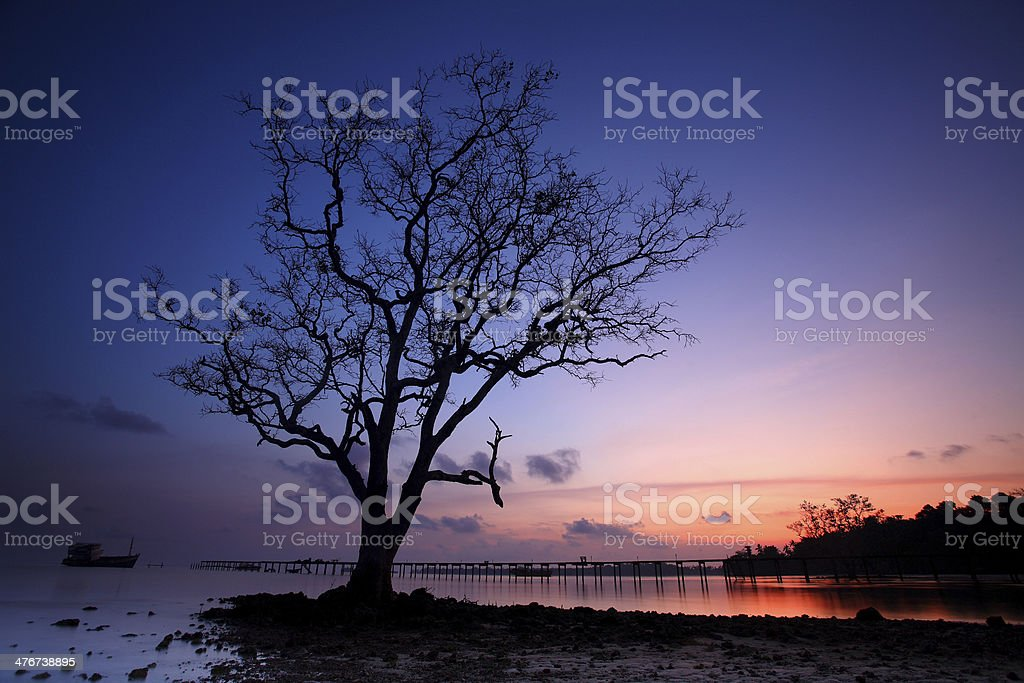 Tropical, Lone Tree royalty-free stock photo