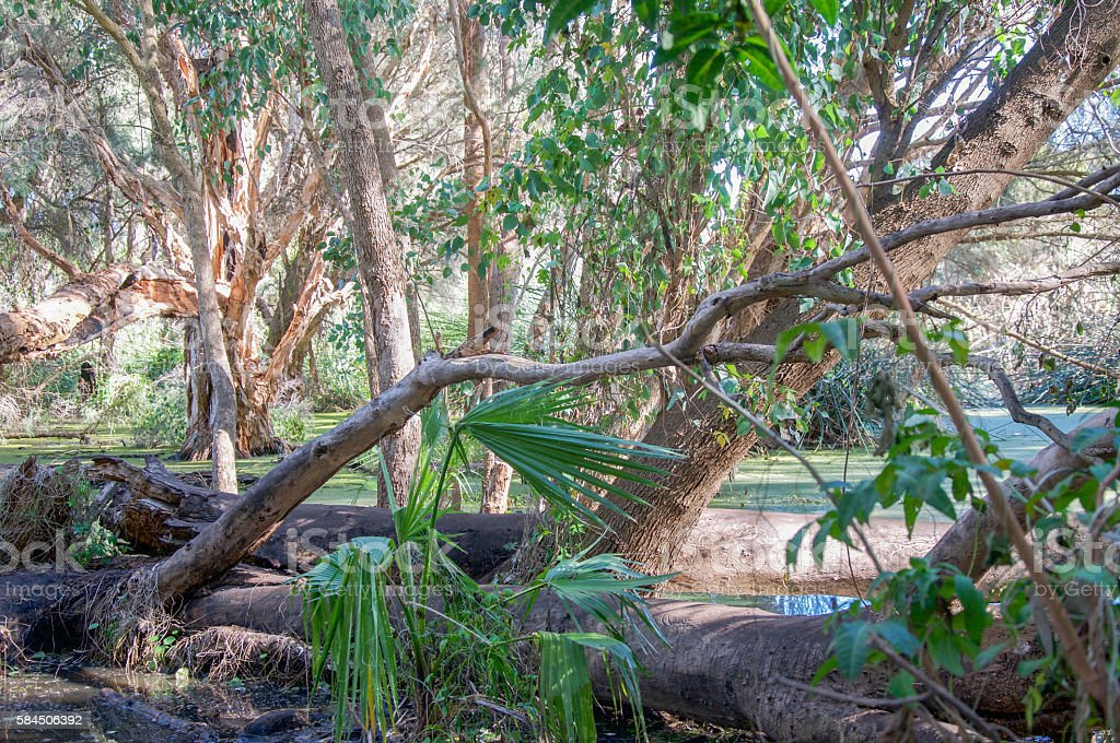 Tropical Lush Wetland stock photo