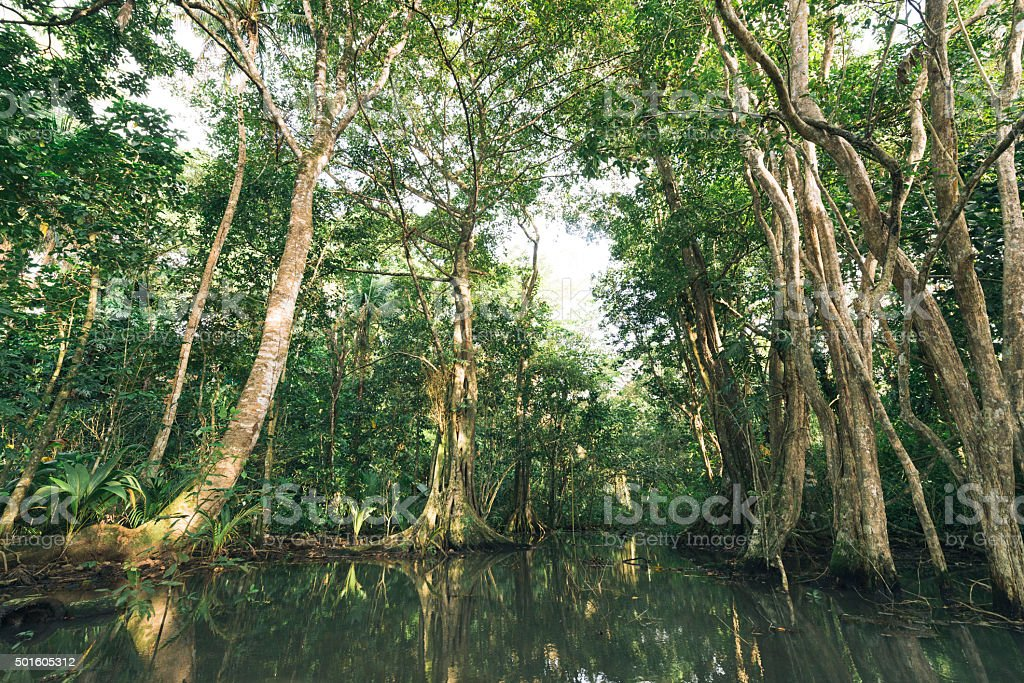 Tropical Manzanillo Costa Rica Wetland Landscape Travel Destinations stock photo