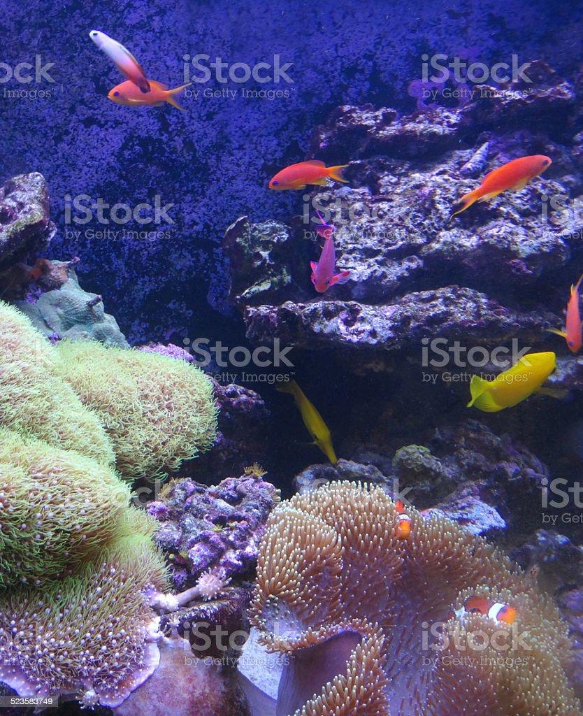 Tropical marine aquarium fish tank image, real living coral reef stock photo