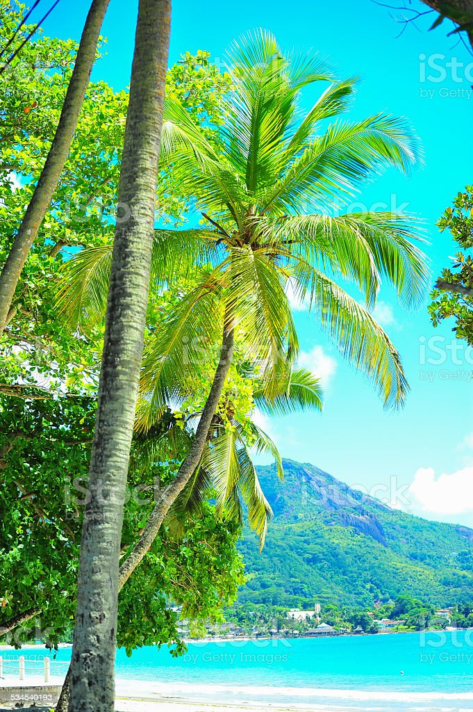 tropical melody stock photo