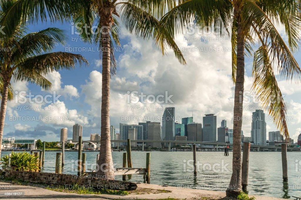 Tropical Miami stock photo