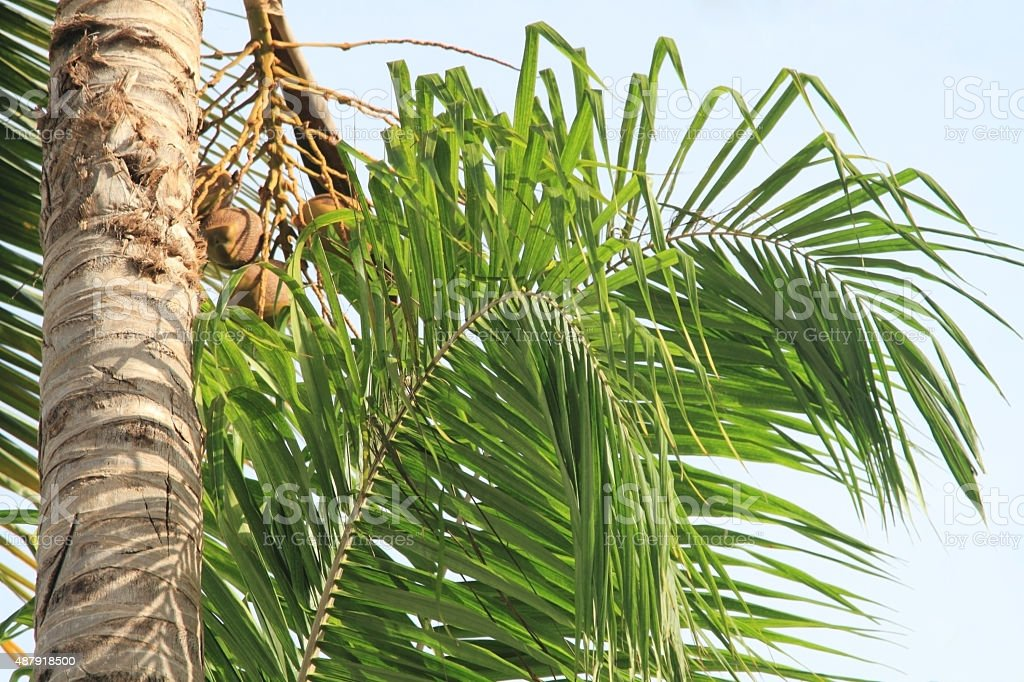 Tropical nature background. royalty-free stock photo