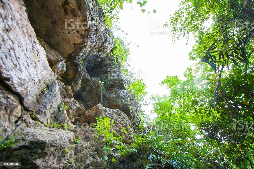 Tropical nature stock photo