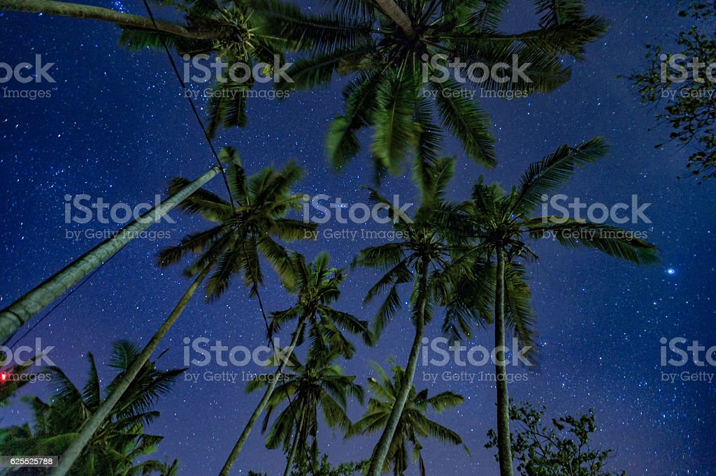 Tropical night scene low angle with palms and starry sky stock photo