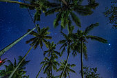Tropical night scene low angle with palms and starry sky