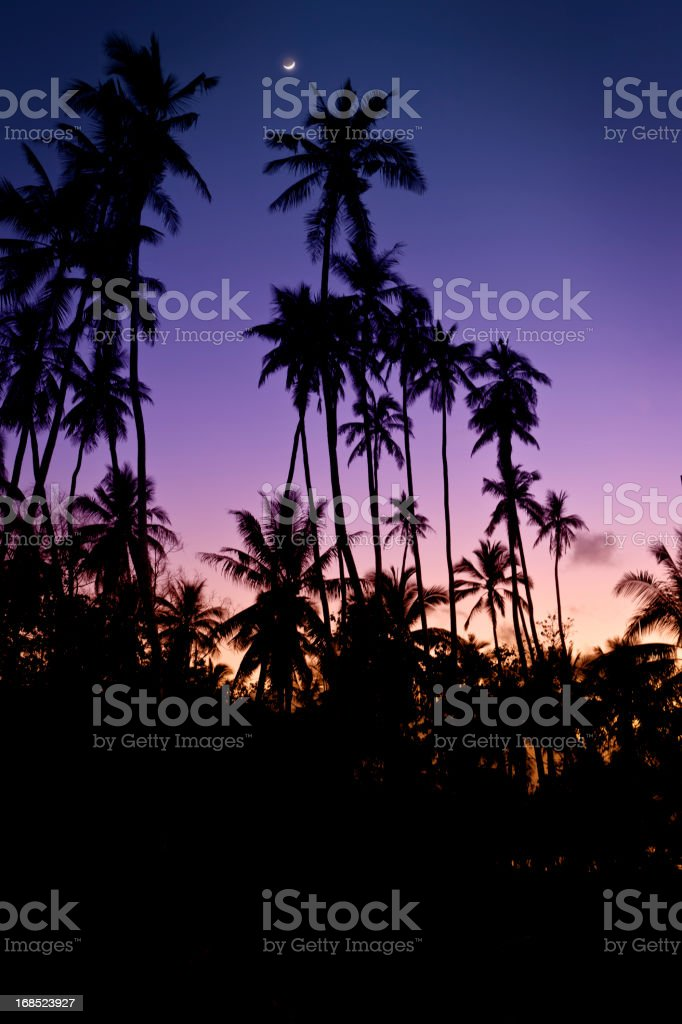 Tropical Night Sky - Daybreak royalty-free stock photo