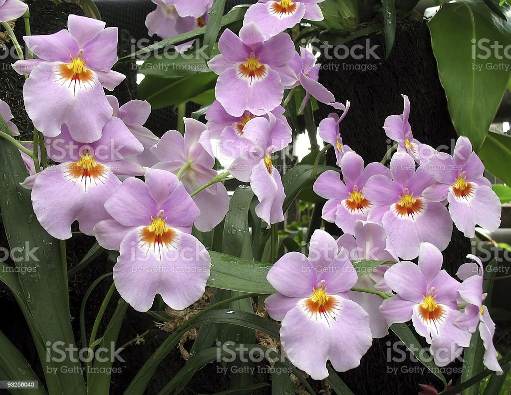 Tropical Orchids stock photo